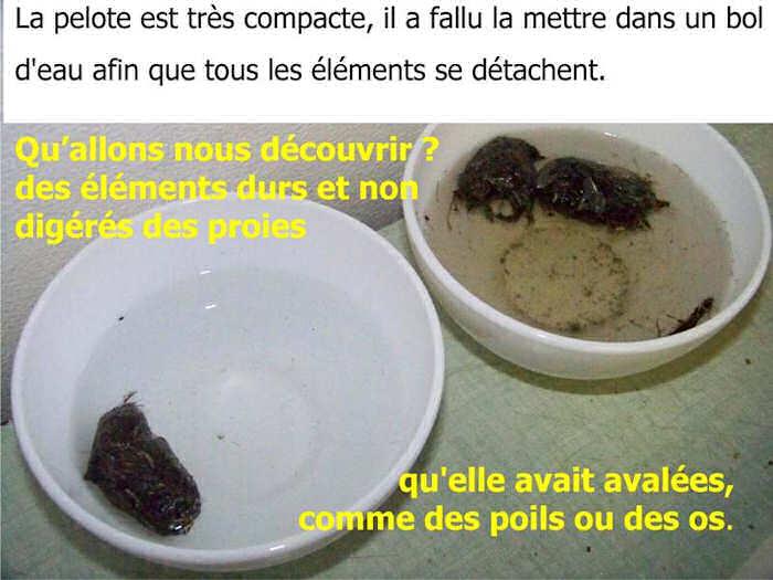 dp-chouette-La chouette xxxx_img_2