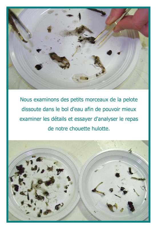 dp-chouette-La chouette xxxx_img_4
